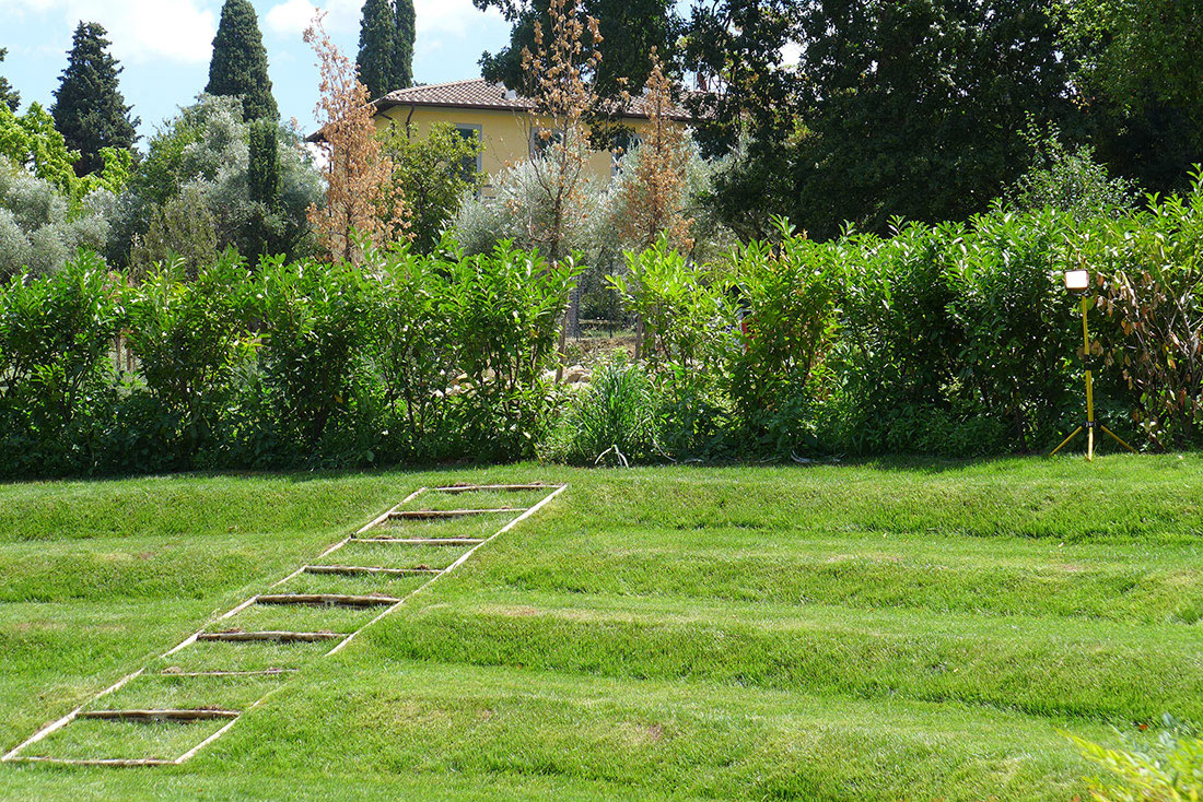 Design of olive grove in the hills above Florence