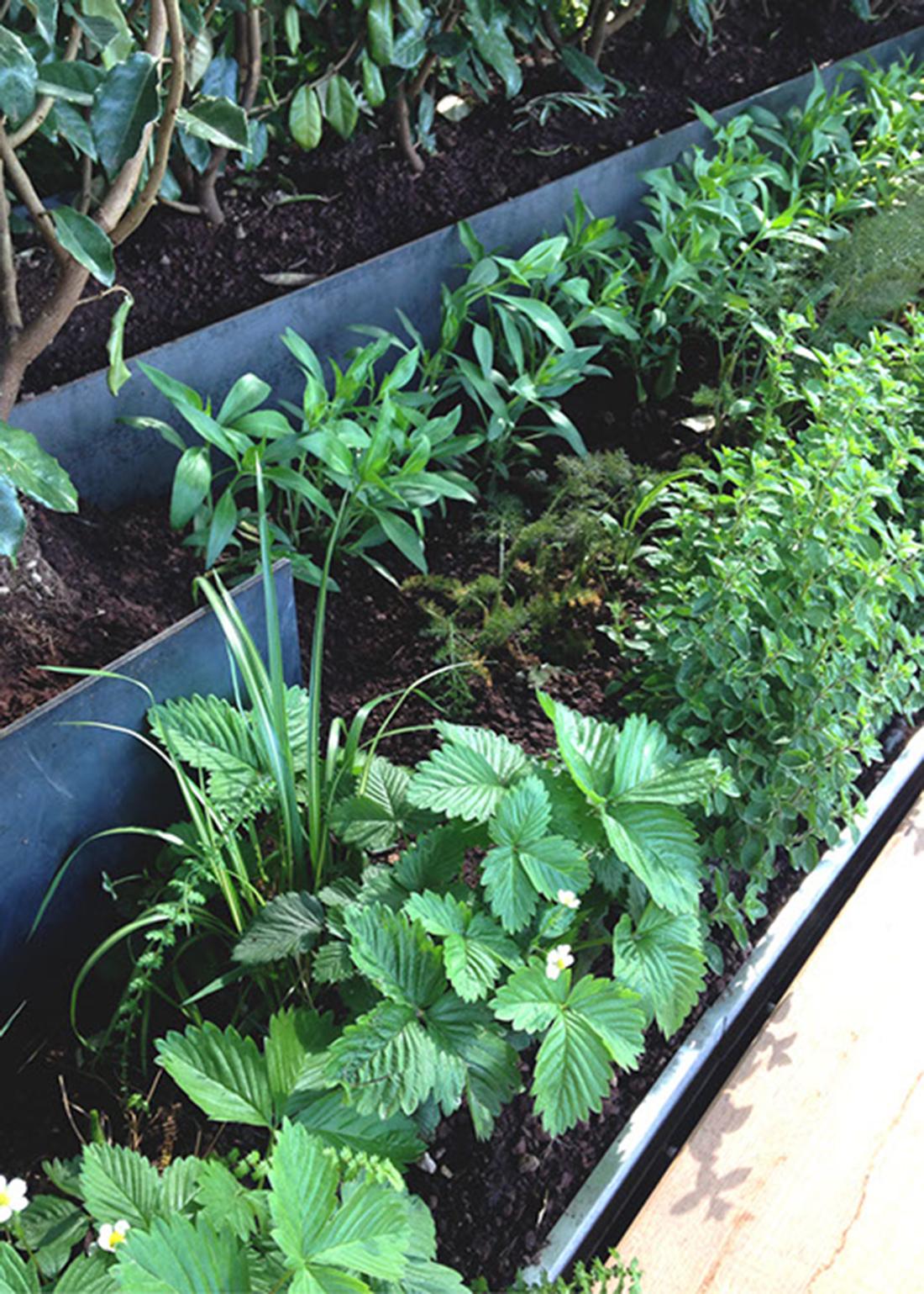 Allestimento giardino pensile milano primanatura giardini for Allestimento giardino