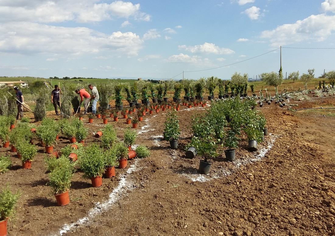 giardino-a-pescia-fiorentina-lavori-in-corso